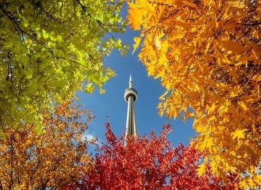 Canada – Dệt Thu Vàng Nơi Miền Đất Hứa